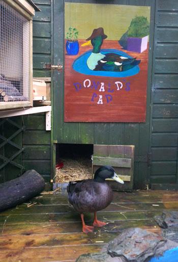 Murals of Ducks